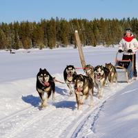 Seikkailu- ja liikuntaleirikoulu (teemaleirikoulu talvella)