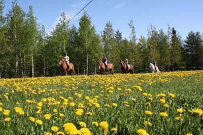 Hevostilavierailu ja ratsastus maastossa, nuoriso (ympärivuotinen)