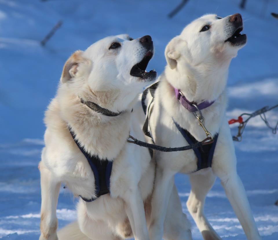 Dog Sledding 2km (winter)