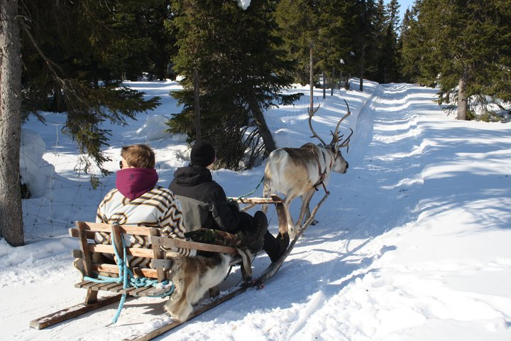 Reindeer sleigh ride (winter)