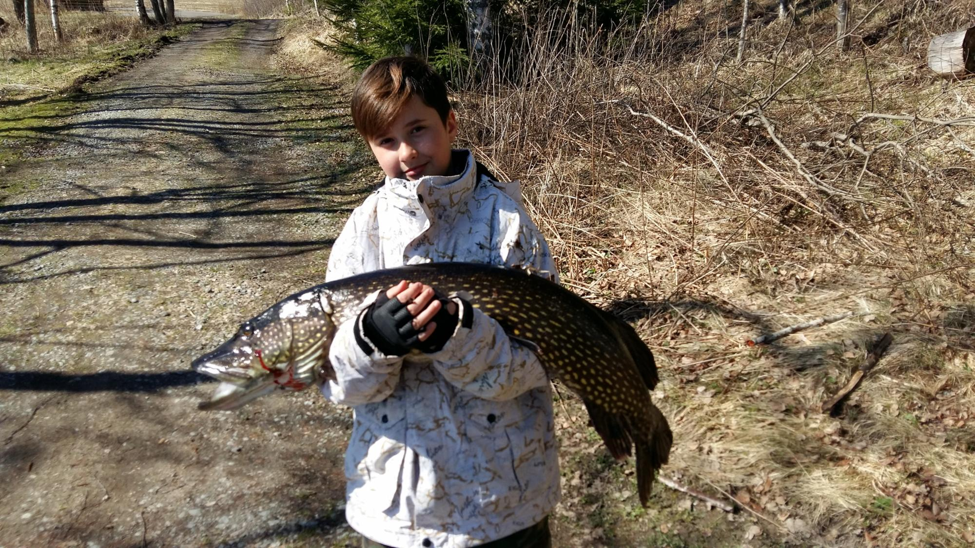 8,7 kg pike caught by a little fisherman!