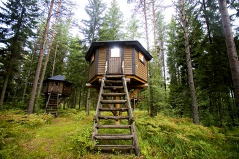 The forrest village tree hut 1